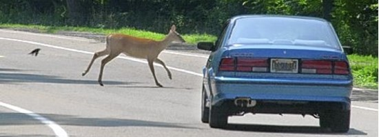 Deer jumping out in front of a car.
